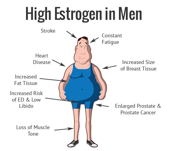Estrogen Levels in Mens